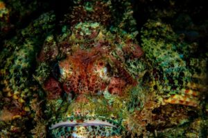 Scorpion Fish Thailand - Bruce A. Campbell