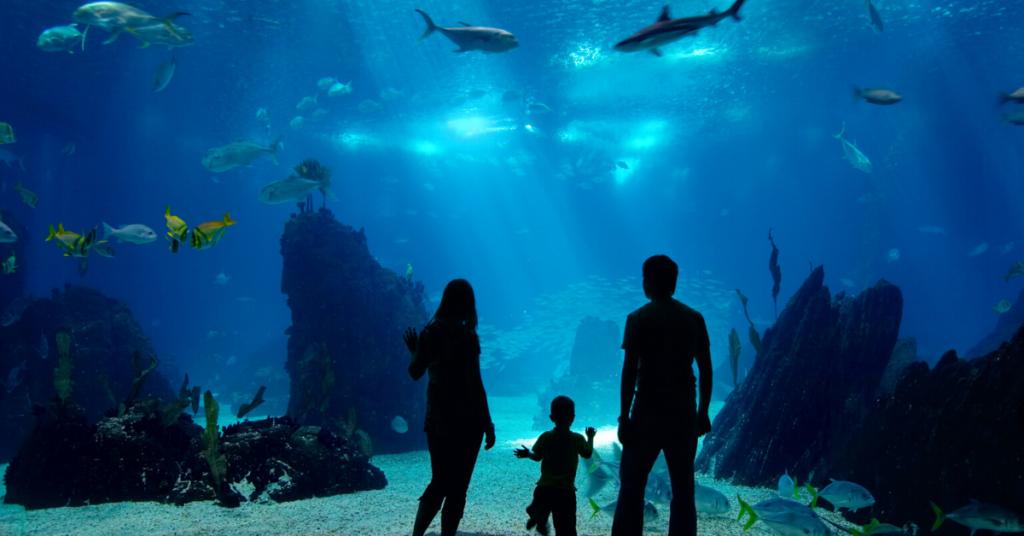 Aquarium Scuba Diving