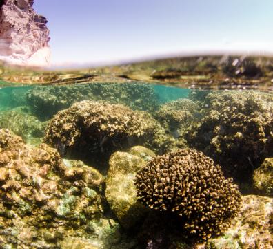 Sea of Cortez Liveaboard